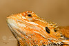 "This can be found in the ""ANIMALS"" gallery under REPTILES AND AMPHIBIANS"