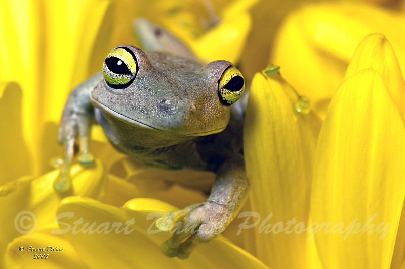 "This picture can be found under ""Animals"" > ""Reptiles and Amphibians"""