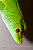 """This can be found in the """"ANIMALS"""" gallery under REPTILES AND AMPHIBIANS"""