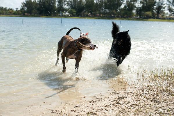 2012.03.17 Bark Park @ the Lake