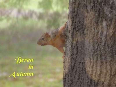 VIDEO - Berea In Autumn