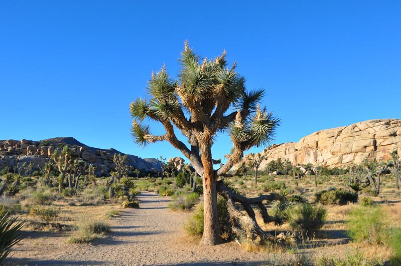 Just look at this beautiful path through Barker Dam in Joshua Tree National Park. If you go at sunrise, the temperature is perfect and you have the whole place to yourself.