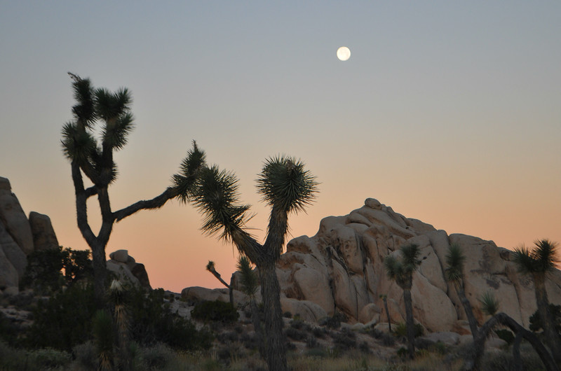 Moon set in Joshua Tree National Park with Joshua Trees kissing against a backdrop of gloriious boulder mountains.