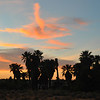 What do you see in these clouds at this beautiful sunset at the Oasis of Mara.