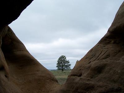 Lone tree...Medicine Rocks State Park near Ekalaka, Montana
