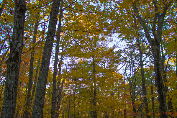 Shenandoah National Park Fall Leaves - L6