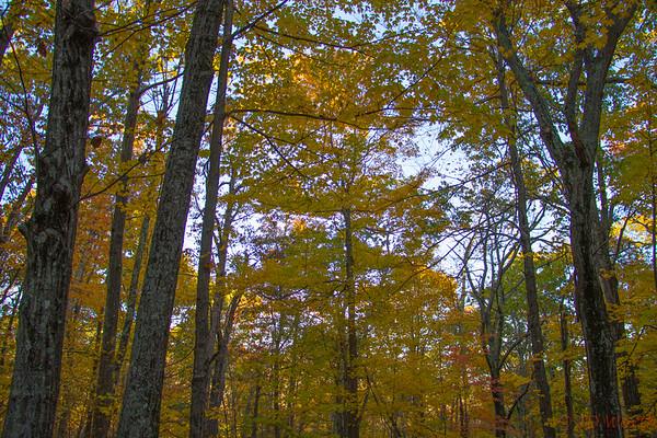 Shenandoah National Park Fall Leaves - L6