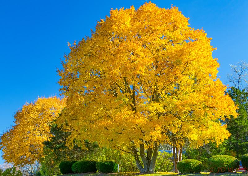 Golden Maple Luray, VA - L1