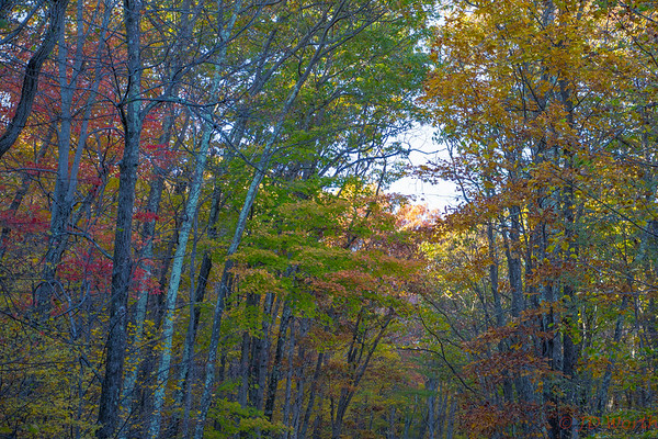 Shenandoah National Park Fall Trail - L5