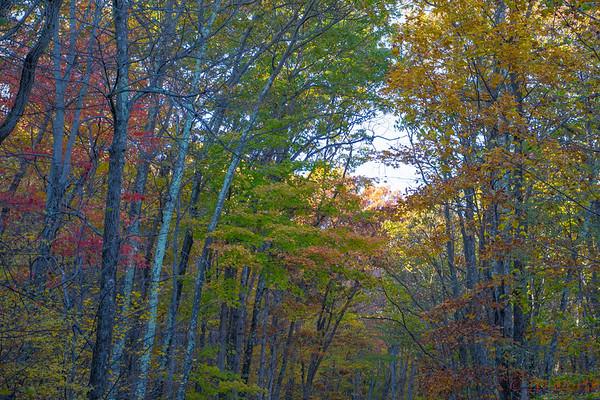 Shenandoah National Park Fall Trail - L5