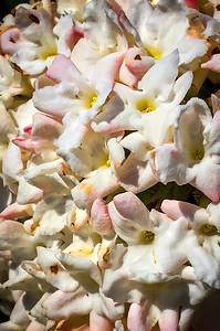 Bush blossoms