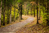 Bluff Trail Fall Path-1 IMG_4289 26.7x40in 300dpi