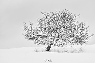 My Favourite Tree BW