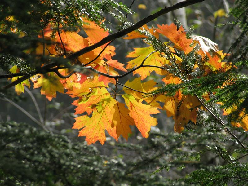 Fall leaves in Bridgewater