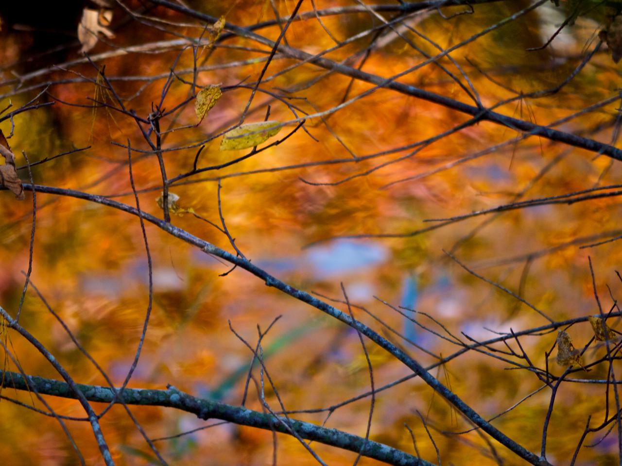 Fall in Nova Scotia