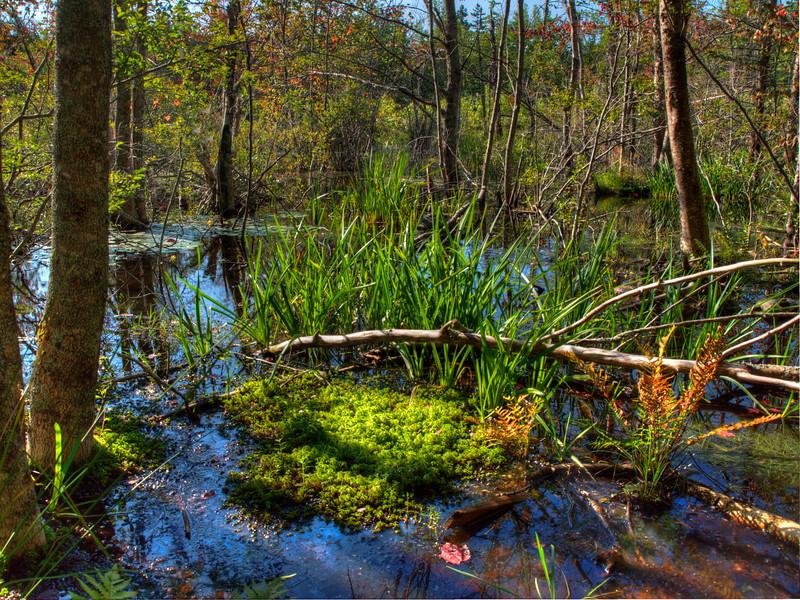 Swampy Color