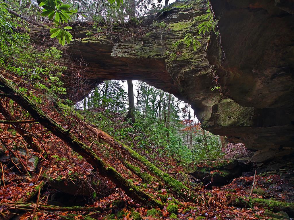 Coal Branch Natural Bridge - 1