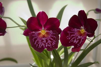 My Orchids Folder