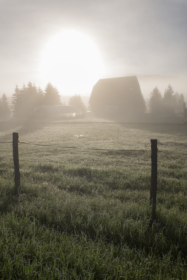 Barn in Morning Fog