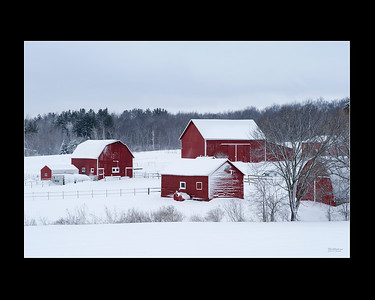 Red Wisconsin Barns Covered With Snow