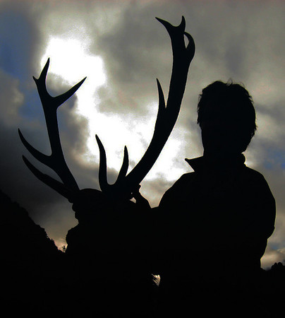 Silhoette Red stag trophy