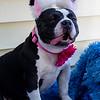 missy-ears2