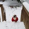 winsty-snow-2018