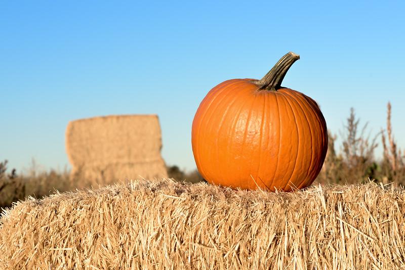 Halloween celebration with a pumpkin on a hay bail