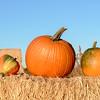 Unique shaped pumpkins on a hay bail