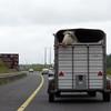 drive to Killarney Ireland