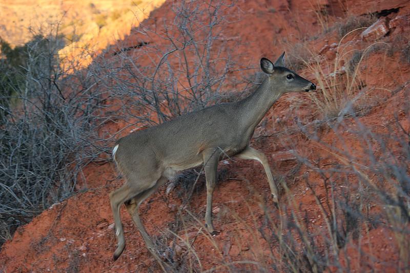 -Palo Duro Canyon State Park, Texas
