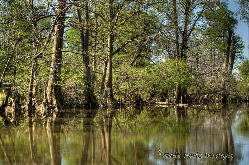 Tulip Creek.  Ouachita County, Arkansas.  April 12, 2011.