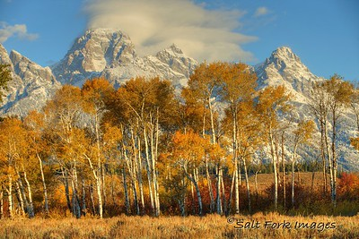 Aspens and Tetons - Grand Teton National Park, Wyoming