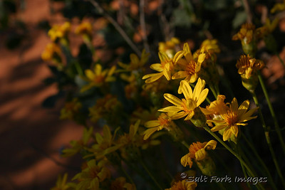 Wildflowers stretch toward the sunlight in Arches National Park.