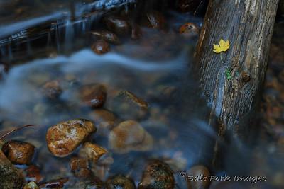 Flowing Water - Teton Creek - Teton Canyon, Wyoming