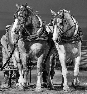 Big Boys:  Teton County Fair - Horse Pull Competition