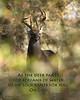As the Deer2