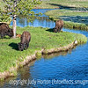 Images of Yellowstone National Park : Images captured in Yellowstone National Park in Wyoming
