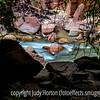 Virgin River in Zion National Park