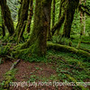 Hoh Raiinforest in Olympic National Park