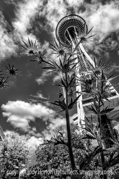 Erygium and the Space Needle