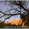 The cliffs of Zion as viewed through the branches of a dead tree at sunset