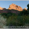 The cliffs of Zion blaze red at sunset with sunflowers in the foreground