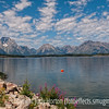 Grand Tetons at Jackson Lake with fireweed blooming on the edge of the lake; best viewed in the largest sizes