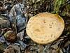 Mushroom in the woods - Pure nature wildlife  (19)
