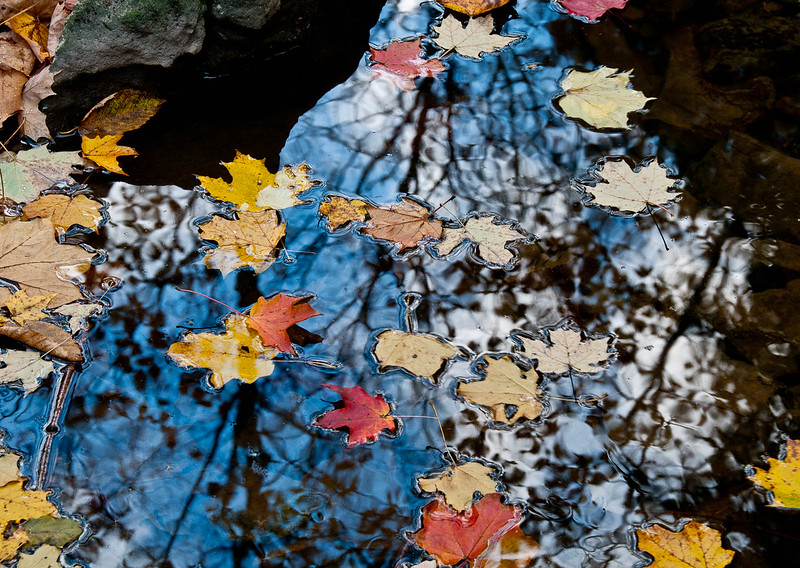 Fall leaves floating in stream.