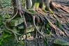 Roots DSC5936