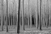 DSC_7623e TREES-4