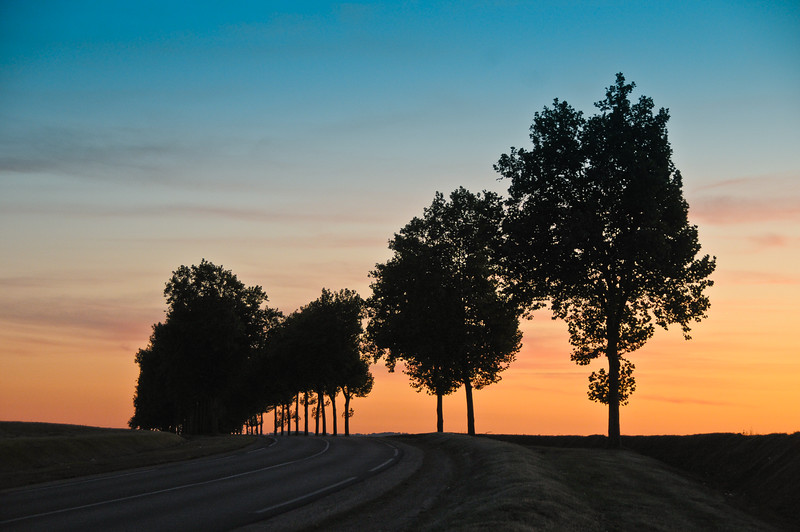 France Trees silhouette-8066
