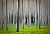 Trees 7622-